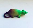Крыса растущая в воде